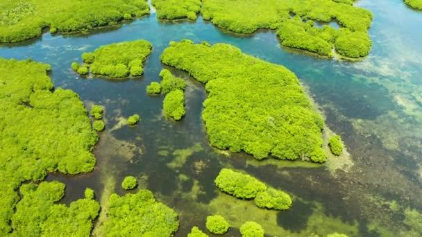 Letecký pohled na mangrovových lesů a řeky.