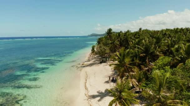 Trópusi tengerpart pálmafákkal., légifelvétel.