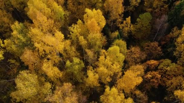 Podzimní les, pohled shora. Koruny stromů se žlutým listím. Opadavý les na podzim.