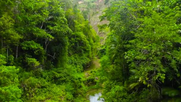Fluss im Dschungel. Bohol, Philippinen.