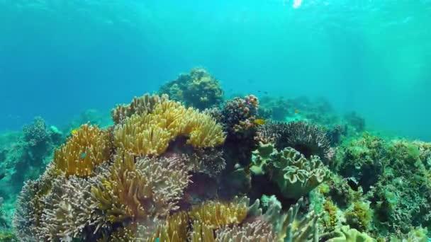 Korallzátony halakkal a víz alatt. Bohol, Fülöp-szigetek.