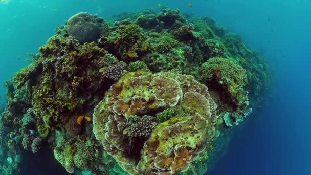 Korallzátony és trópusi halak. Panglao, Fülöp-szigetek.