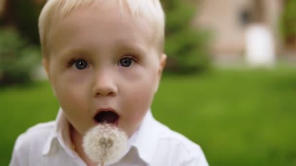 Porträt einer schönen blonden Jungen Löwenzahn weht. Mit Blick auf die Kamera. Grasgrün fließend Bbackground. Bewegung