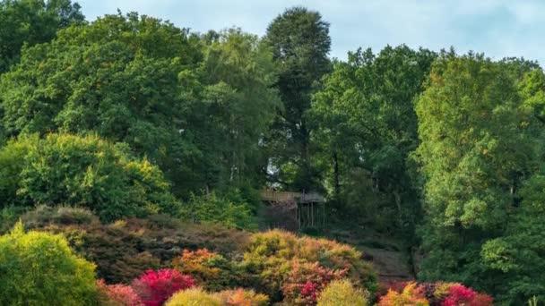 Autumnal landscapes at Winkworth arboretum, in Surrey, England, UK
