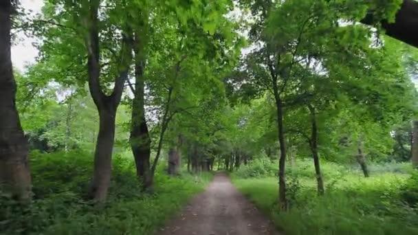 Letní Park. Ulička ve starém parku. Typická ukrajinská příroda v létě.