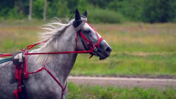 Lassú mozgás: Egy lovas a babakocsi fut az ösvényen. Egy zár-megjelöl egy ló feje
