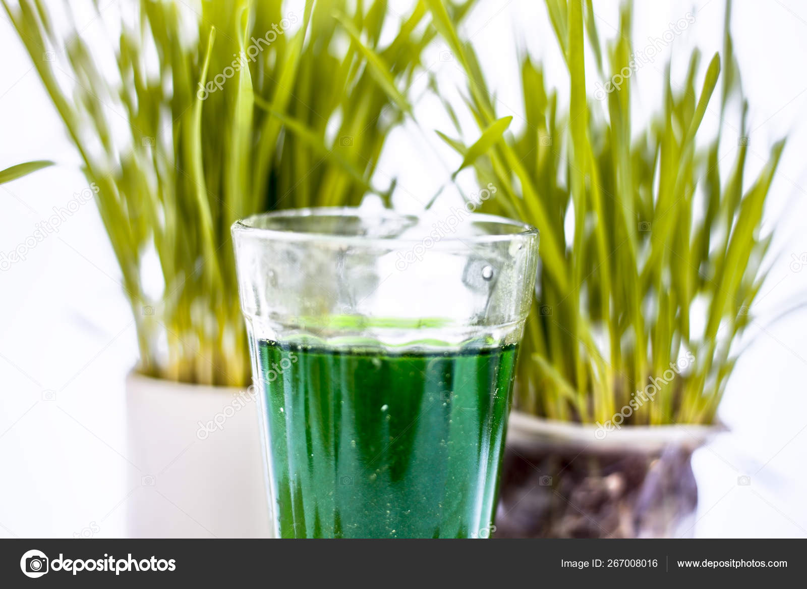 Plant De Menthe En Pot close two small pots containing wheat grass them isolated