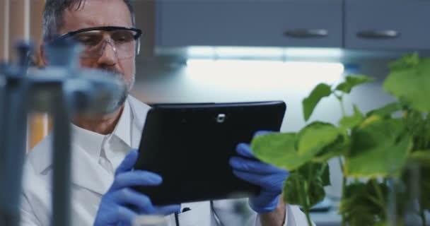 Wissenschaftler fotografiert grüne Pflanze