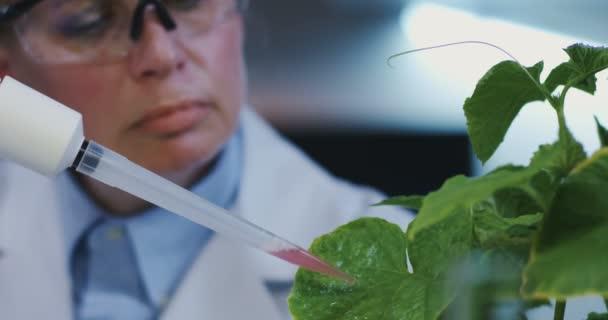 Wissenschaftler lässt Flüssigkeit auf Blätter fallen