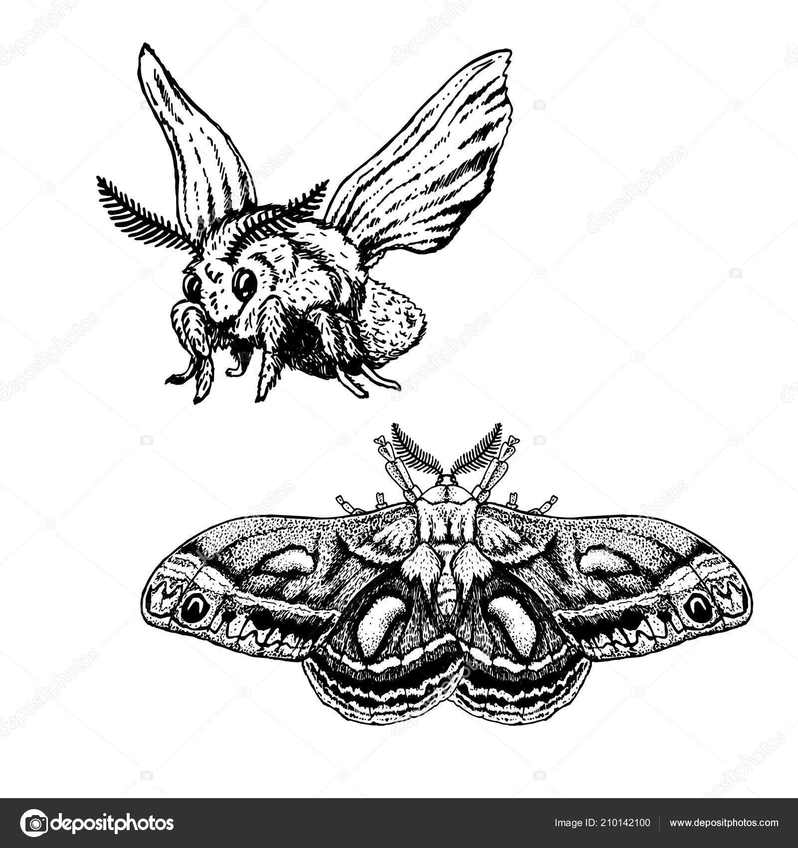 Rucne Tazene Sada Motyl Realisticke Kresby Vektorove Ilustrace