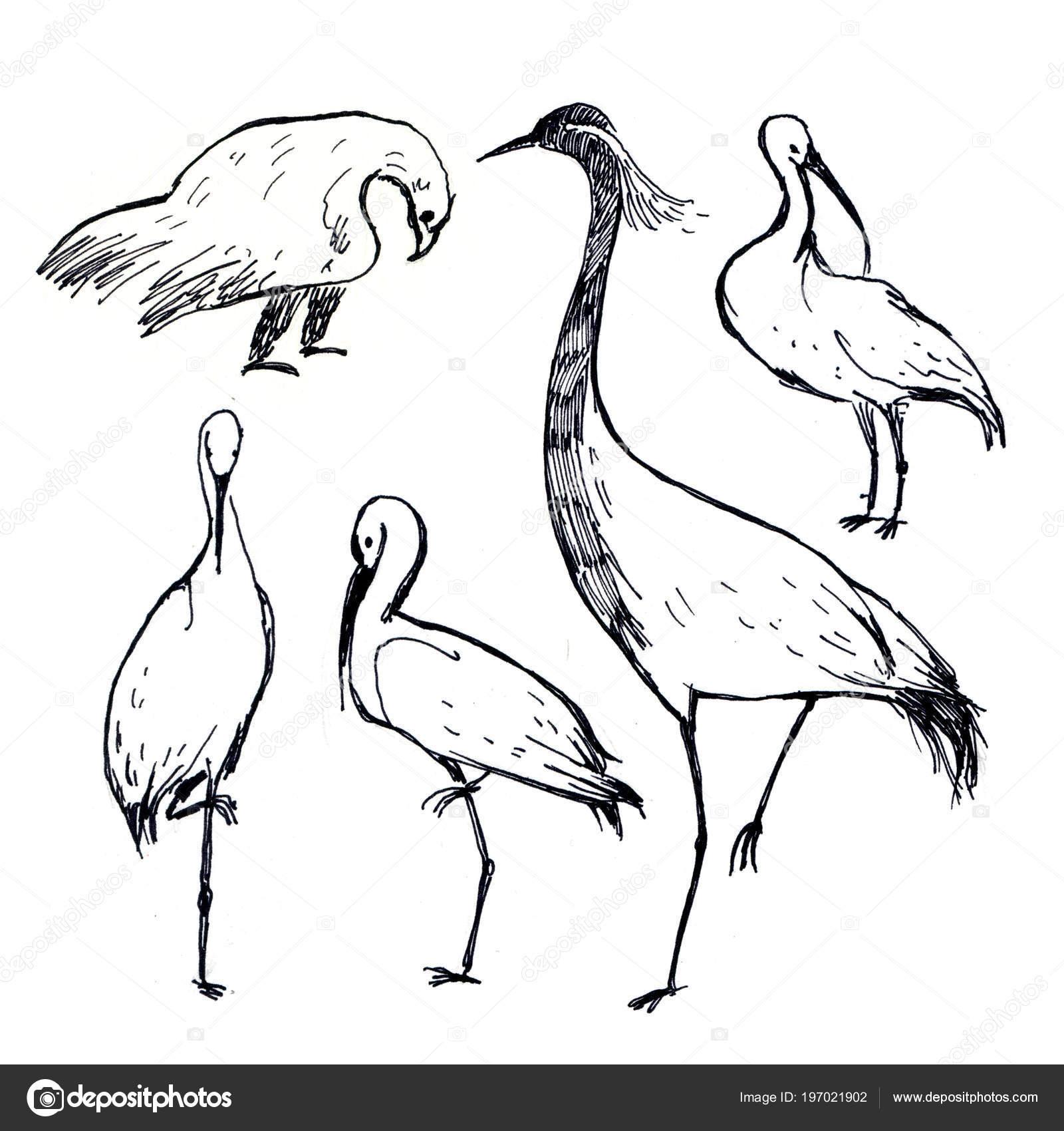 Illustration Dessin Plume Noir Blanc Oiseaux Cigogne Aigle