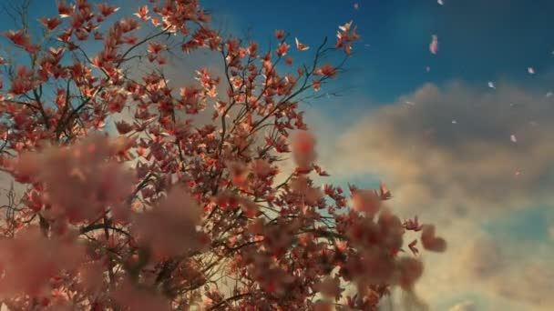 Beautiful magnolia tree, falling flowers, against sunset, 4K