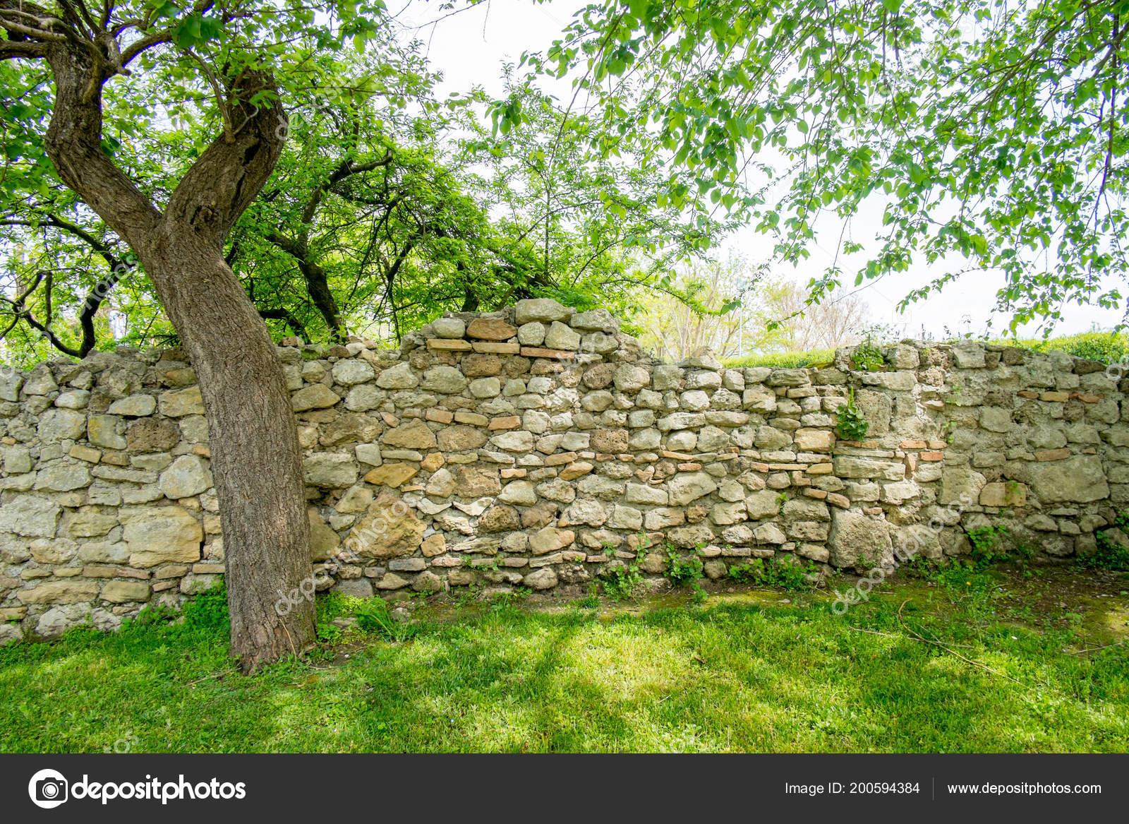 Baum Mit Blattern Der Natur Mit Gras Und Stein Wand Stockfoto