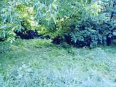 Letní krajina. Zelený photobackground