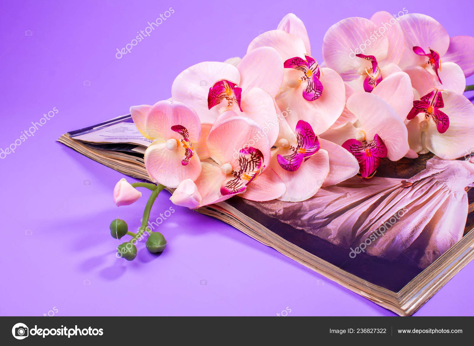 Orchid Design Flower Beauty Background Spa Magazine Pink