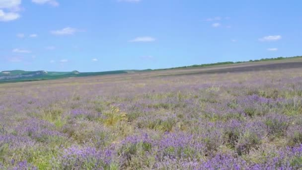Lavender field photomurals in Ukraine photomurals summer in the afternoon Beautiful purple