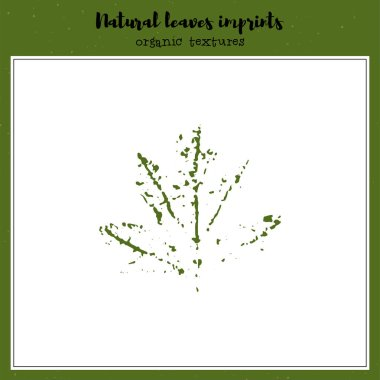 Vector leaf imprint