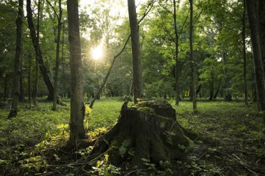 park outdoor simple natural scene in sun rise morning time with tree stump center of composition