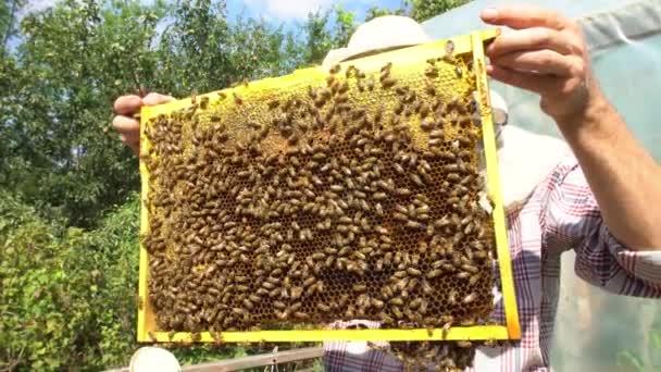 Imker mit einer Bienenwabe voller Bienen in Nahaufnahme