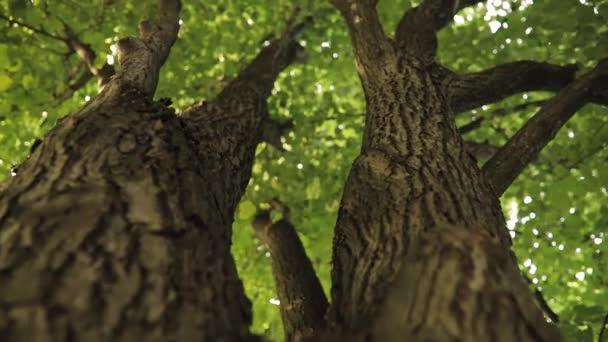 Kůra stromu, letní přírody