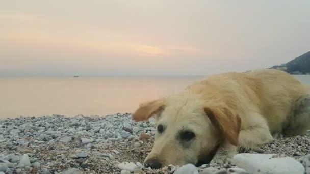 Welpe Hund am Strand hat Spaß.