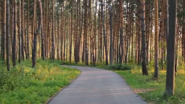 Cyklistika v první osobě na cestě v lese při západu slunce. Zpomaleně. 4k video