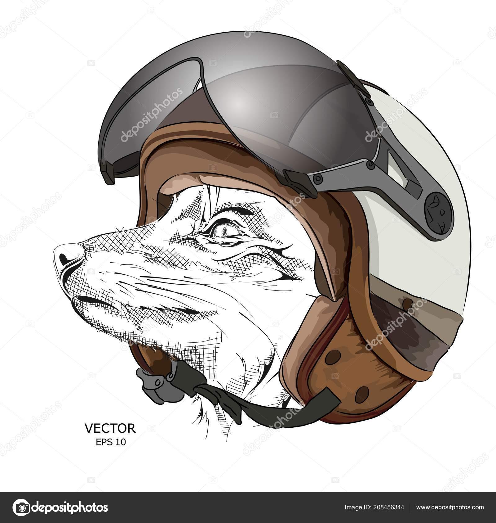 Renard Portrait Dans Casque Moto Image Illustration