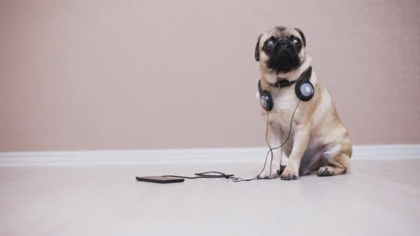 Portrét roztomilé, vtipné Mops pes poslech hudby se sluchátky
