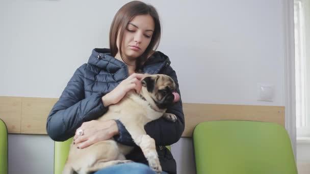 Beteg kutya mopsz bekötözött mancs vonal a állatorvos rendelőintézet. Lány karjaiban tart egy beteg kutya