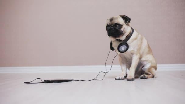 Aranyos, vicces mopszli kutya fejhallgató zene portréja