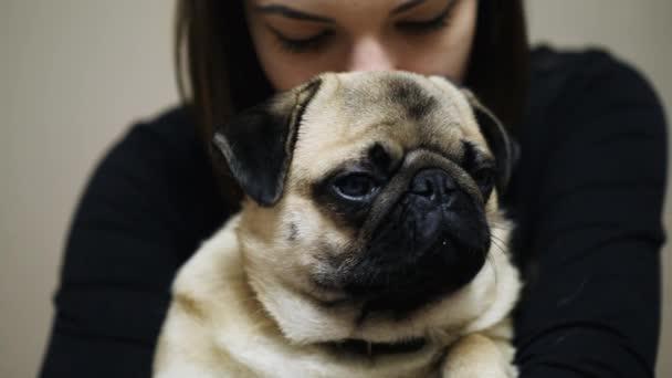 Szép nő átölelve álmos mopszli. Aranyos kövér mopszli kutya közelről