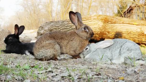 drei niedliche Kaninchen auf einer Wiese im Wald