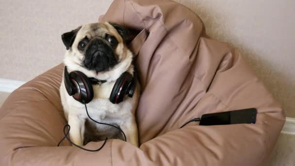 Vicces mopszli kutya nagy fejhallgató zenét hallgat feküdt egy zsák szék