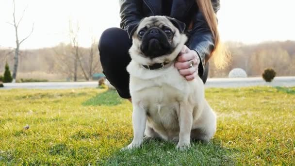 Woman scratching happy pug dog in the sunny park. Portrait of a cute dog
