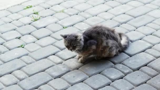 Wütende Katze im Kampf mit kleinem Hund. Spitz will Katze in den Schwanz beißen, lustige Tiere