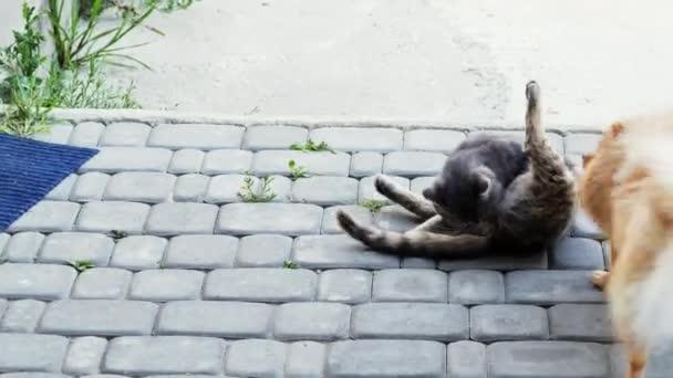 Hund spielt mit einer Katze. Spitz will die Katze in den Schwanz beißen