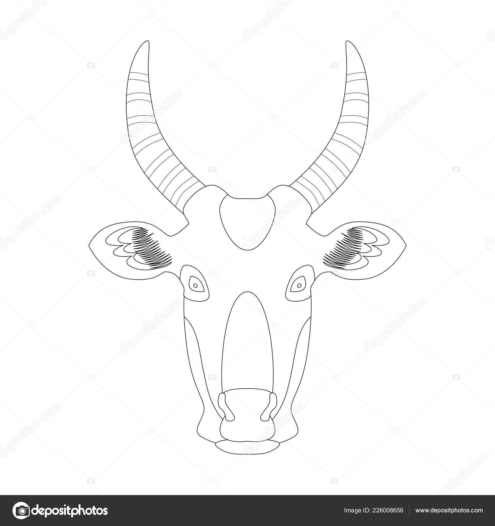 Tête Une Vache Illustration Vectorielle Coloriage Graphique