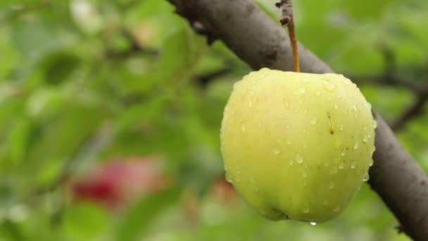 Apple mezi listy