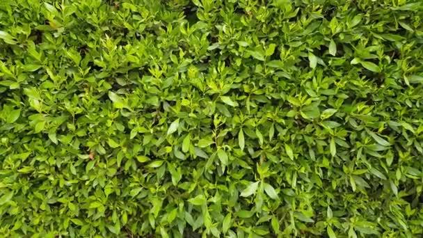 zelené listoví pozadí
