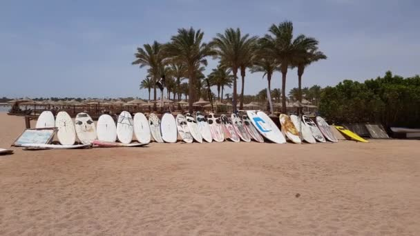 surfboards stand in a row