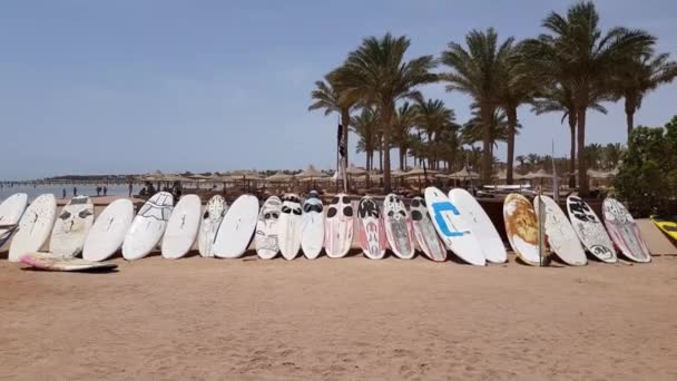 surfboards stand in a row on the sandy seashore. outdoor activities at sea