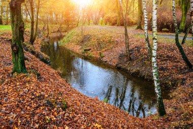 """Картина, постер, плакат, фотообои """"маленькая река в осеннем лесу, много букв постеры цветы фотографии природа"""", артикул 204525000"""