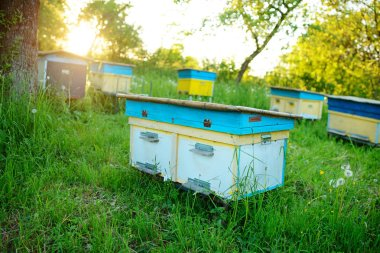 Polish landscape with beehives on ecological field.