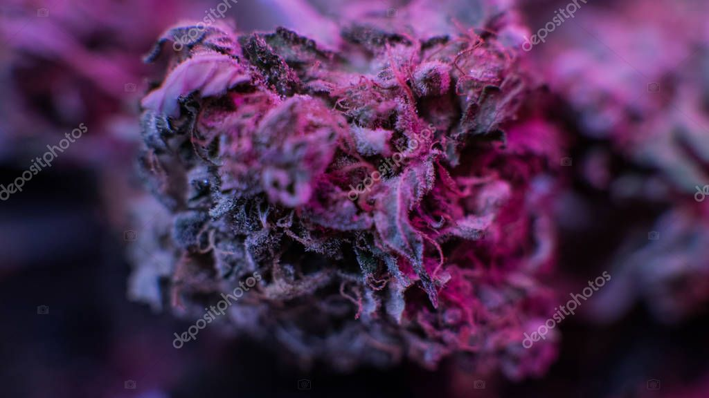macro marijuana buds. Medical Marijuana Strains 2018