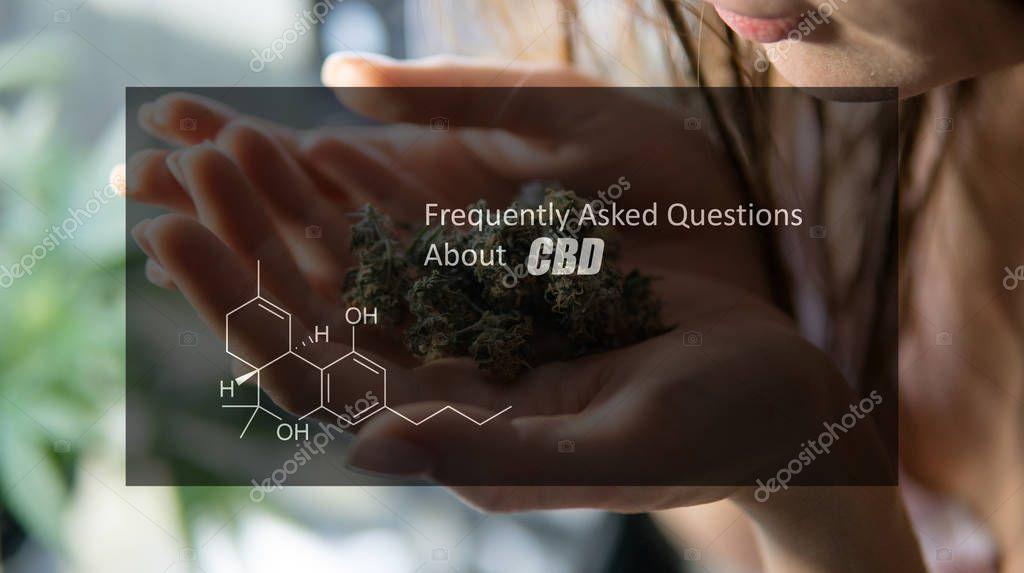 girl holding fresh marijuana buds in the hands