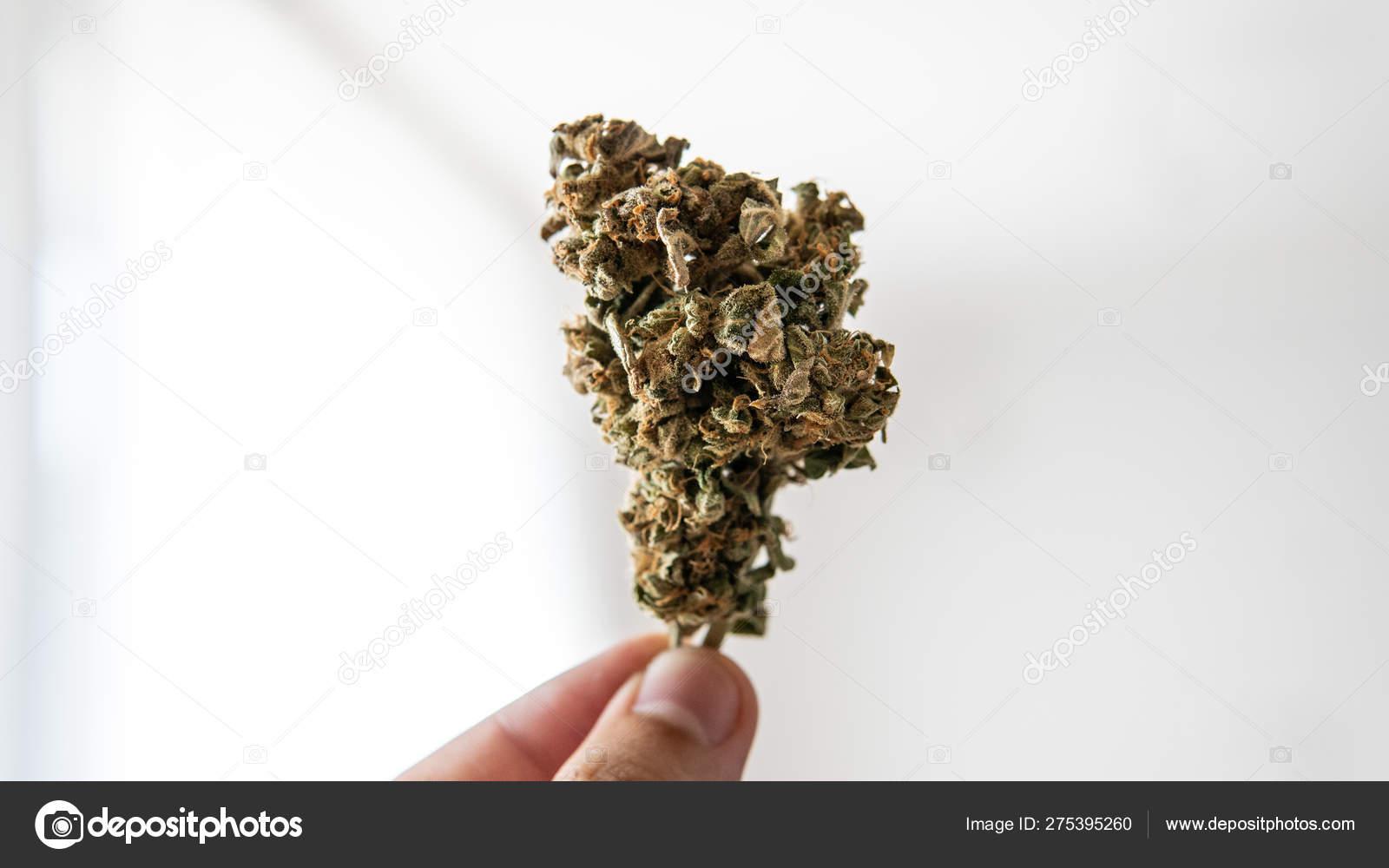 Потенция от курения марихуаны новинки о марихуане