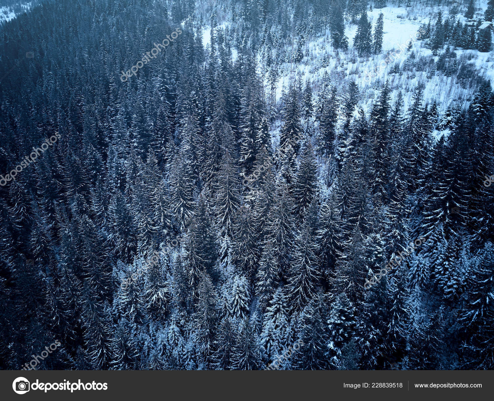 Aerial View From Above Of Winter Forest Covered In Snow Pine Tree And Spruce Forest Top