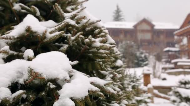Snow falling fir tree branches, wooden cottages on background. Heavy snowfall at mountain village ski resort. Cold frosty winter day in mountains. Authentic landscape design with spruce and bushes.
