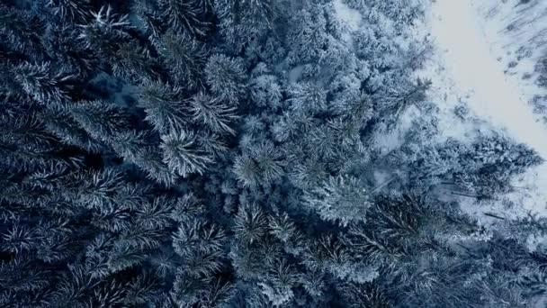 Letecké záběry ze zimní jedle lesa v horách. Pohled shora borovic pokryté sněhem. Kvadrokoptéra nadjezdu zasněžené smrkových lesích. Vánoční sezóna. Náladové počasí na studené mrazivý