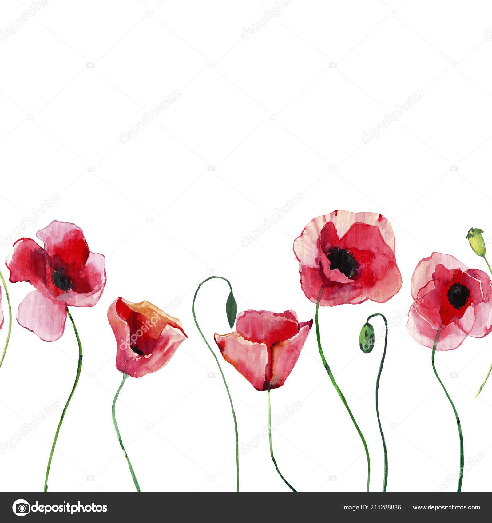 Fleurs Coquelicots Rouges Floral Base Plantes Avec Vert
